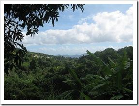 Forêt de la Guadeloupe - Photo : Guillaume Cattiaux
