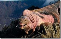 Les Maladies des Iguanes