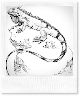 Tatouage.iguane