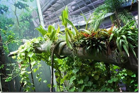 Votre terrarium doit recréer l'environnement naturel d'un iguane