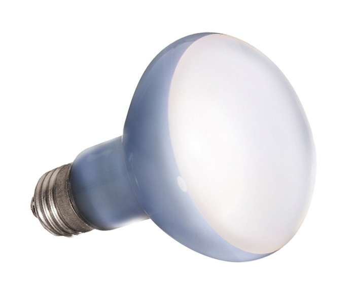 Lampes, ampoules et néons pour l'éclairage de votre terrarium pour iguane