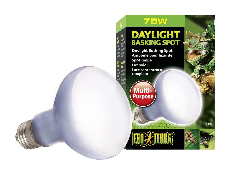 Ampoule pour lézarder à placer dans le basking spot de votre terrarium pour iguane