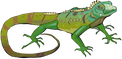Iguane Logo